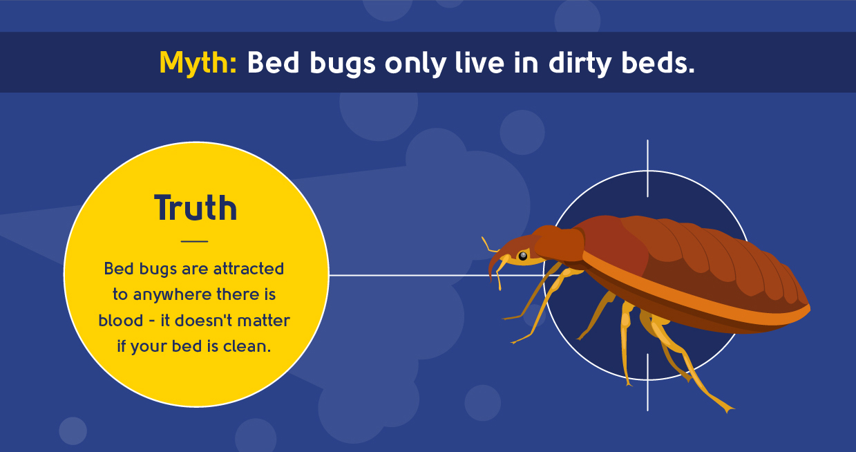 myth - bed bugs only live in dirty beds