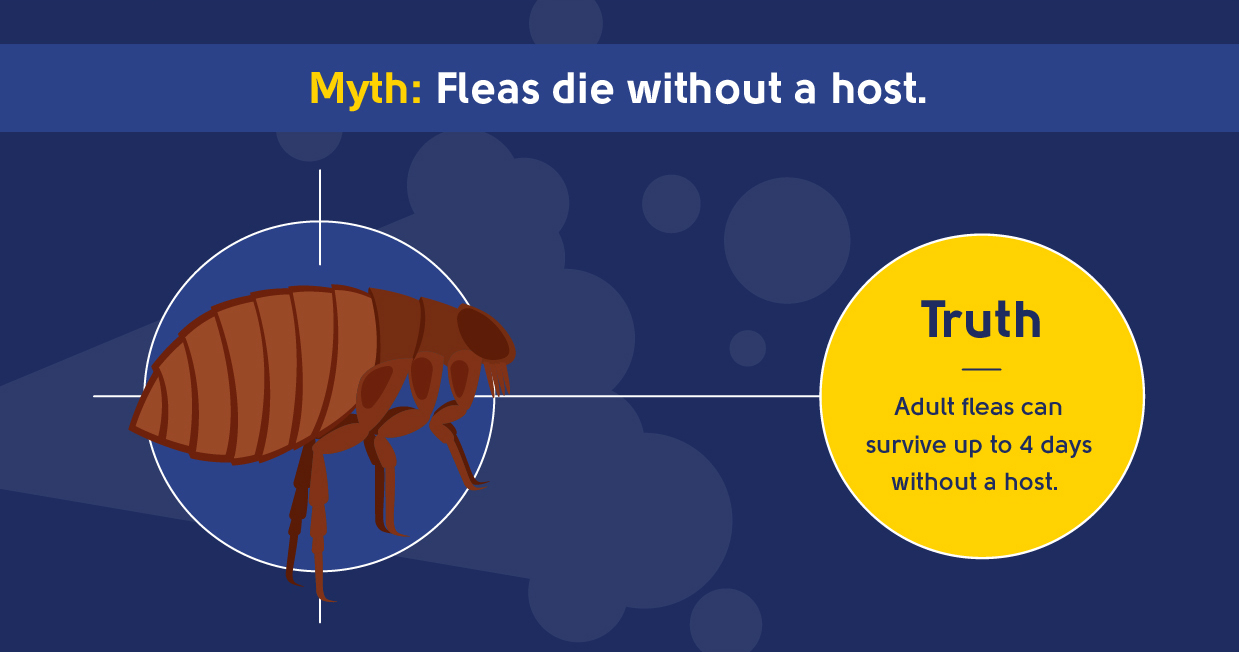myth - fleas die without a host